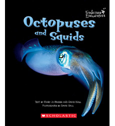 Undersea Encounters: Octopuses and Squids