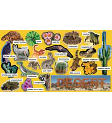 Desert Plants & Animals Mini Bulletin Board