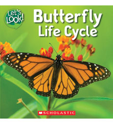 Let's Look-Life Cycle: Butterfly Life Cycle