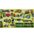Rainforest Plants & Animals Mini Bulletin Board