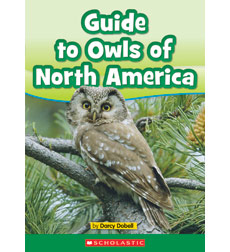 A Guide to Owls of North America