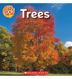 Let's Look—Fall: Trees