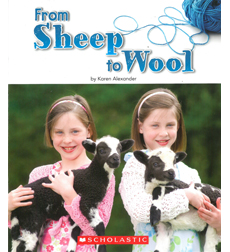 From Sheep to Wool