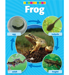 Frog Life Cycle Photo Chart