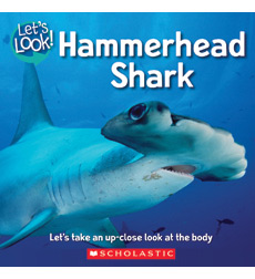 Let's Look!—Sharks: Hammerhead Shark