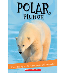 It's All About...: Polar Plunge