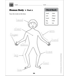 Human Body (Content Words): Grade 1 Vocabulary Packet