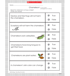 Chameleon, Chameleon - Activity Sheet