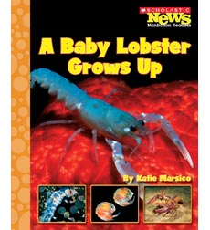 Scholastic News Nonfiction Readers—How Things Grow: A Baby Lobster Grows Up