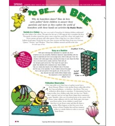 TO BEE. . . A BEE (Bug Pattern and Hexagon Puzzle): Teaching With the Best of Instructor