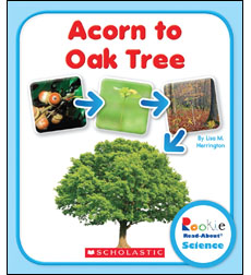 Rookie Read-About® Science-Life Cycles: From Acorn to Oak Tree 9780531249758