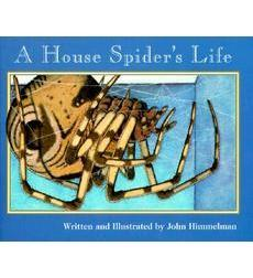 Nature Upclose: A House Spider's Life