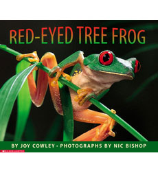 Red-Eyed Tree Frog 9780590871761
