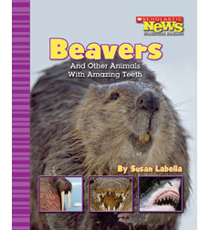 Scholastic News Nonfiction Readers-Animals: Beavers