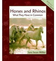 Horses and Rhinos