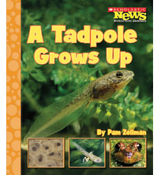 Scholastic News Nonfiction Readers—Life Cycles: A Tadpole Grows Up