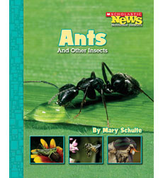 Scholastic News Nonfiction Readers-Animals: Ants