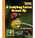 Scholastic News Nonfiction Readers—Life Cycles: A Ladybug Larva Grows Up