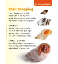 Shell Shopping (Hermit Crabs/Habitats): Science Poem