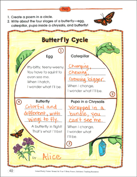 Butterfly Cycle: Poetry Frame